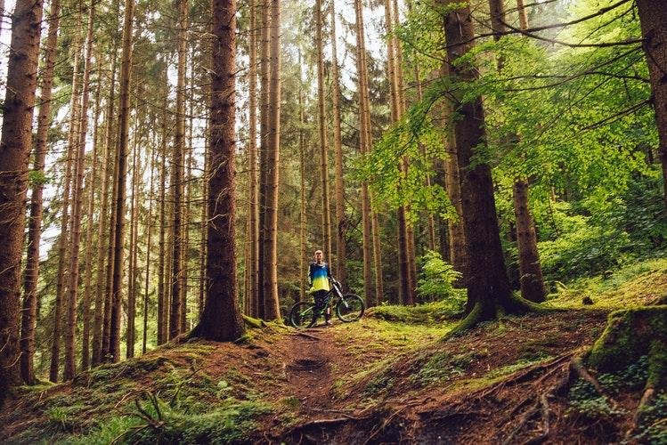 rower w lesie iwonicz
